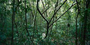 Selva Tràgica - di Yulene Olaizola (foto 03)